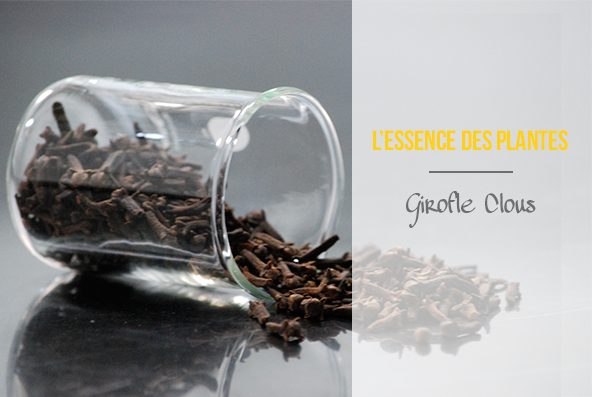 L'essence des plantes - Girofle clous